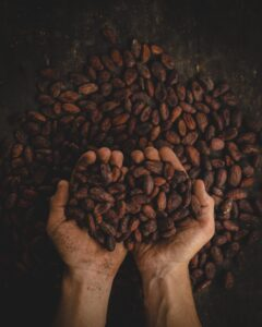 hands full of cacao beans
