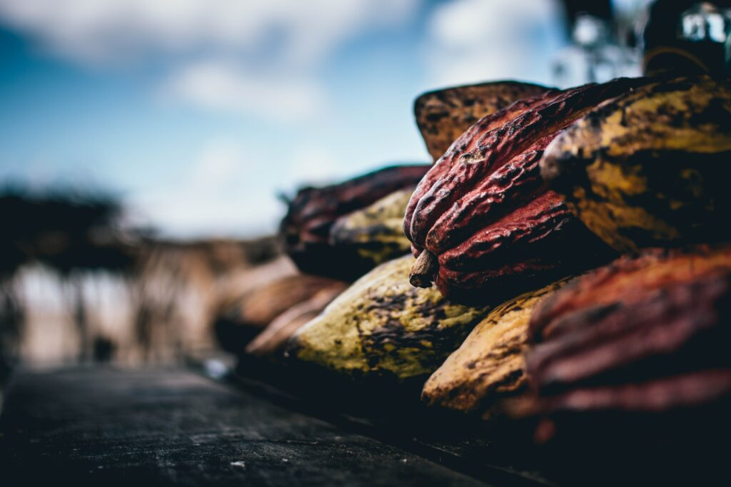 fermented raw cacao